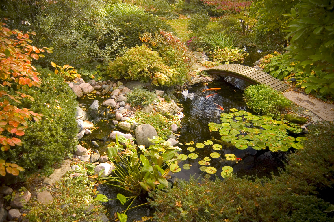 Bringing nature and tranquility of water to your backyard!